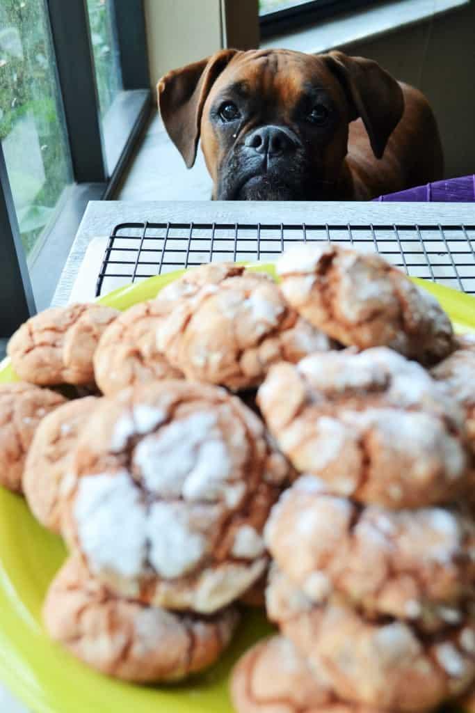 Crinkle Spice Pumpkin Cookies